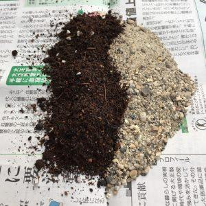 サボテンの土